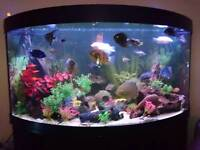 Jewel corner tank for swap