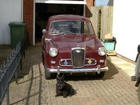 wolseley 1500 series 2 1962 classic car.tax exempt maroon in colour.