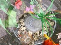 60l BiOrb fish tank