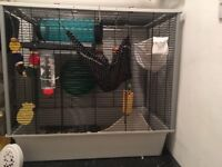 2 male rats (Ronnie and Reggie) with large cage