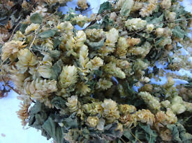 GARLAND OF DRIED HOPS (real not artificial) Home Decor / Wedding