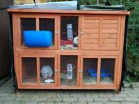 Pets at Home Blue Bell Rabbit Hutch with 2 Mini Lop Rabbits and all accessories and food