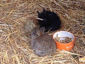 Baby rabbits for sale boys and girls