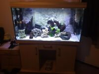Reena fist tank aquarium 4ft tropical or marine set up and extras wave maker rocks ornaments heater