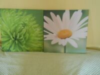 Two Lovely Flower Prints - - £5 for the pair - - -