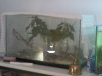 Baby Stick insects (10 or more)