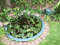 Pond & filter system - round fibreglass 1.5m diameter