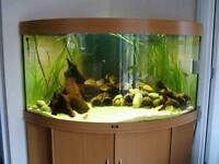 350 LITRE JEWEL TRIGON CORNER FISHTANK IN BEECH WITH MATCHING CABINET