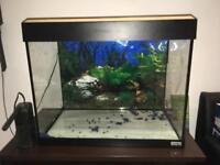Fish Tank - Fluval