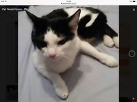 Free cat looking for new home