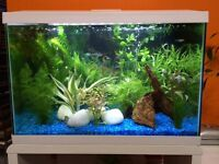 70 litre fish tank in beautiful condition with 100W heater, nice blue gravel and artificial plants