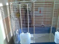 canary lizard hen rung and cage 20 pound