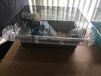 8 week old hamsters plus cages
