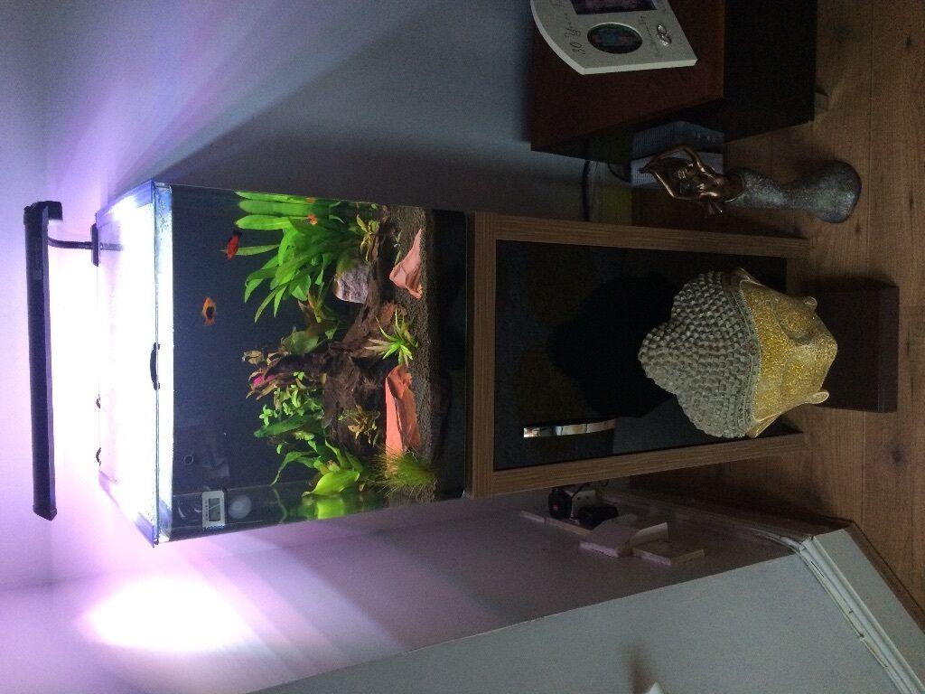 aqua one aquanano 40 tropical aquarium 55 litres with cabinet in poole dorset gumtree. Black Bedroom Furniture Sets. Home Design Ideas