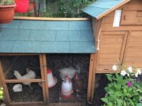 Hens: 5 Healthy, Productive, Vaccinated Chickens with Coop will deliver locally