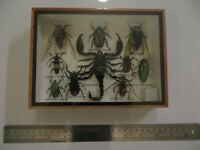 Box Framed Display of Insects