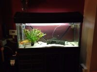 Complete Fish tank and Cabinet with heater for tropical or coldfish inc LED lightshow