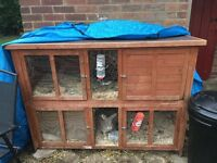Two male rabbits for sale with large double hutch and large bag of food and sawdust