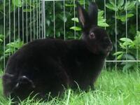 Beautiful bonded bunnies