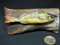 TAXIDERMY small Perch fish. No.10 on DRIFTWOOD. Wood is 11cm long approx.