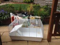 Large Rabbit cage, sawdust, straw and food