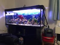 Fishtank 5ft