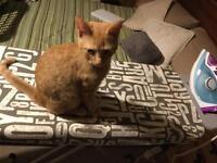 Ginger Boy 5 months old
