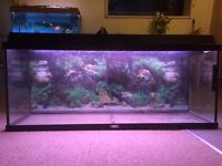 125litre 3 ft juwel fish tank