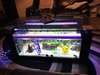 Coffee table fish tank aquarium