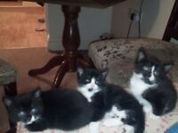 kittens ready to new home