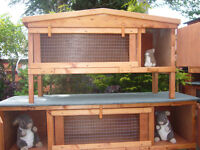 "chicken coop robust germ free 24""x 24"" from £30.00 and very easy to clean worth viewing"