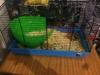 Cage and 2 mice