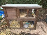Female rabbit and double hutch