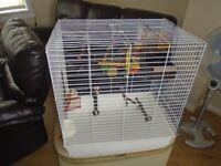 bird cage & toys