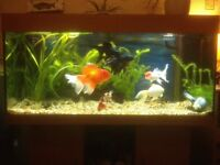 Aquarium fish tank juwel rio 180 beech