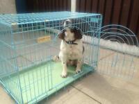 Large size dog cage