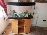 Bow Front Juwel 180 Litre Fish Tank with Stand & Full Setup