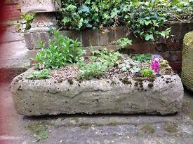 Garden Trough Including Lovely Plants