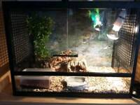Vivarium with 2 leopard geckos