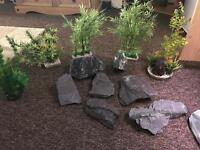 5 large plants and big pieces of slate