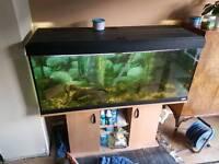 240l fish tank with fish