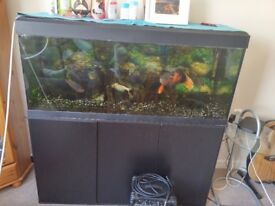 Fish tank with fish and ornaments. It is a 240lt