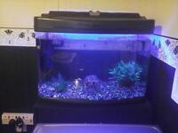 Aquarium Full Set Up with Sub Tropical Fish