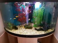 Juwel 190lt corner fish tank