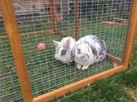 Pair of bunnies