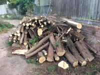 Timber logs, firewood, wood