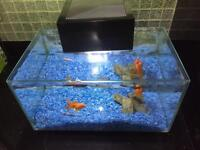 Fish tank & fishes for sale total 12