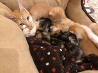 ***Kittens***
