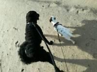 Dog Walking/ Pet Sitting/ Mobile Livery