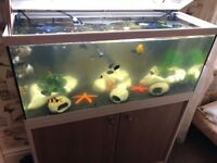 Aquarium with decorations filters and 40 assorted fish